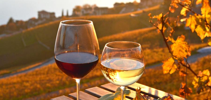 Matrimonio Azienda Vinicola Toscana : Visita enoculturale presso la cantina gotto d oro